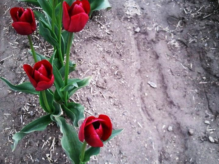 Of Tulips And Unlikely Names