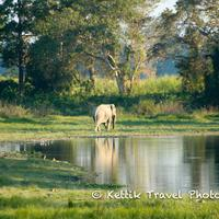 2012 : Wildlife Volunteering options at Bandipur and BRT hills in South India