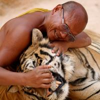 living a dream - the tiger temple experience